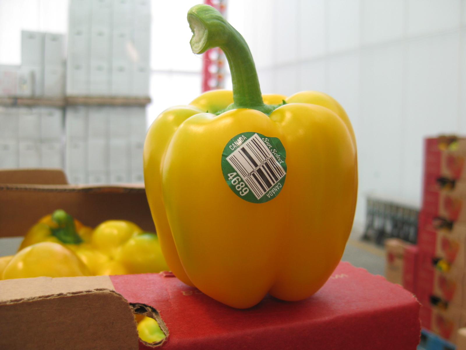 Yellow Peppers August 2014 2
